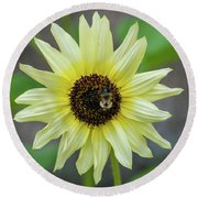 Round Beach Towel featuring the photograph Italian Sunflower by Brenda Jacobs