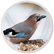Jay In Profile Round Beach Towel