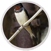 Swallow 2 Round Beach Towel