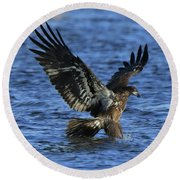Round Beach Towel featuring the photograph Juvenile Eagle Fishing by Coby Cooper