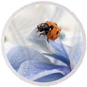 Ladybug Round Beach Towel by Nailia Schwarz