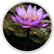 Lavender Water Lily #4 Round Beach Towel