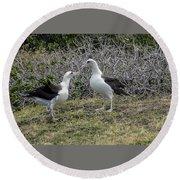 Laysan Albatross Hawaii #2 Round Beach Towel