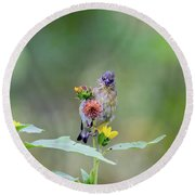 Lesser Goldfinch 4036 Round Beach Towel