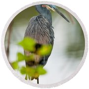 Round Beach Towel featuring the photograph Little Blue Heron by Christopher Holmes
