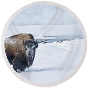 Lone Bison Round Beach Towel