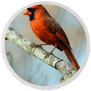 Male Cardinal Round Beach Towel by Debbie Green