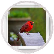 Male Cardinal Round Beach Towel