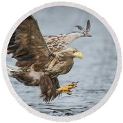 Male White-tailed Eagle Round Beach Towel