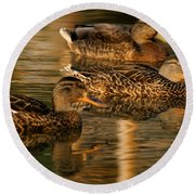 Mallards Swimming In The Water At Magic Hour Round Beach Towel