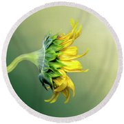 Round Beach Towel featuring the photograph Maria's Sunflower by Mary Timman