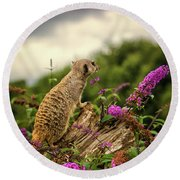 Meerkat Lookout Round Beach Towel by Martin Newman