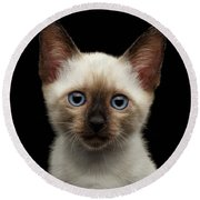 Mekong Bobtail Kitty With Blue Eyes On Isolated Black Background Round Beach Towel by Sergey Taran