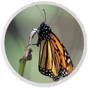 Monarch Butterfly Stony Brook New York Round Beach Towel by Bob Savage