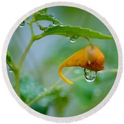 Morning Dew Round Beach Towel by Patrick Shupert