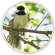 Round Beach Towel featuring the photograph Morning Stretch by Angie Rea