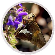 Moth On Purple Flower Round Beach Towel