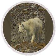 Mountain Goat Ewe Round Beach Towel
