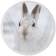 Mountain Hare In The Snow - Lepus Timidus  #1 Round Beach Towel
