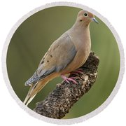 Round Beach Towel featuring the photograph Mourning Dove by Doug Herr