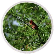 Round Beach Towel featuring the photograph Mr Red by Skip Willits