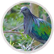 Nature's Best Round Beach Towel by Judy Kay