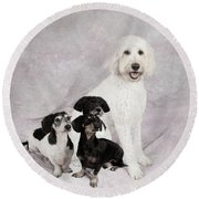 Fur Friends Round Beach Towel by Erika Weber