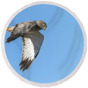 Round Beach Towel featuring the photograph Northern Harrier by Tam Ryan