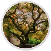 Old Japanese Maple Tree Round Beach Towel
