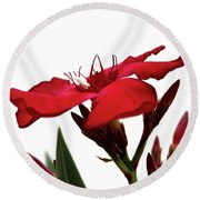 Oleander Blood-red Velvet 3 Round Beach Towel