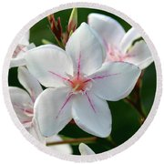 Oleander Harriet Newding  2 Round Beach Towel