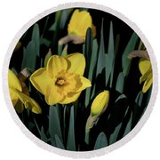 Camelot Daffodils Round Beach Towel