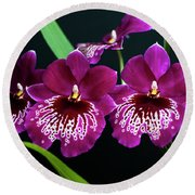 Round Beach Towel featuring the photograph Orchid Miltonia by Lana Enderle