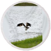 Osprey Fishing In The Afternoon Round Beach Towel by Carol Groenen