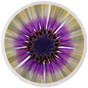 Osteospermum The Cape Daisy Round Beach Towel