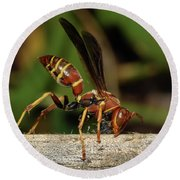 Paper Wasp Round Beach Towel