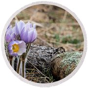Pasque Flower Round Beach Towel
