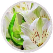 Peruvian Lilies In Bloom Round Beach Towel
