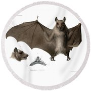 Round Beach Towel featuring the drawing Peters's Epauletted Fruit Bat by Hugo Troschel