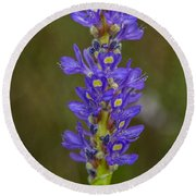 Pickerel Weed Round Beach Towel by Christopher L Thomley