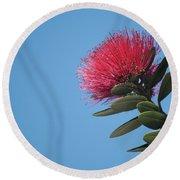 Pohutukawa Tree Flower Round Beach Towel