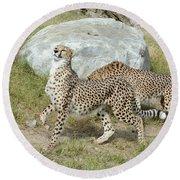 Round Beach Towel featuring the photograph Poise by Fraida Gutovich
