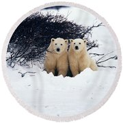 Polar Bear Cubs, Churchill, Manitoba Round Beach Towel