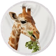 Portrait Of A Rothschild Giraffe  Round Beach Towel