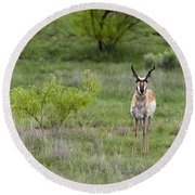 Pronghorn Antelope Buck Round Beach Towel