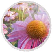 Purple Daisies Round Beach Towel