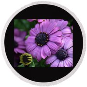 African Daisy Round Beach Towel by Ronda Ryan