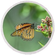Queen Butterfly Round Beach Towel by Tam Ryan