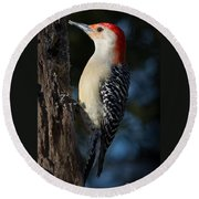 Red-bellied Woodpecker 3a Round Beach Towel