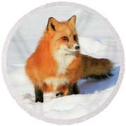 Round Beach Towel featuring the photograph Red Fox by Steve McKinzie